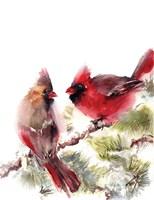 Cardinals II Fine Art Print