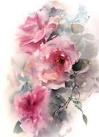Roses in Blush Fine Art Print