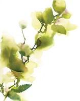 Leaves that are Green II Fine Art Print
