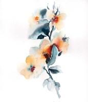 Pretty in Peach II Fine Art Print