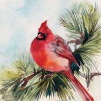 Cardinal VI Fine Art Print