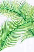 Palm Leaves Fine Art Print