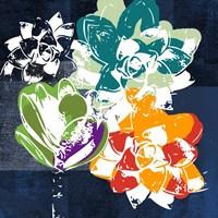 Colorful Succulents I Fine Art Print