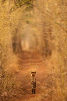 The Tiger In The Tunnel Fine Art Print