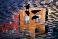 Pigeons Fine Art Print