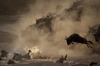 The Great Wildebeest Migration Fine Art Print