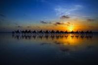 Sunset Camel Ride Fine Art Print