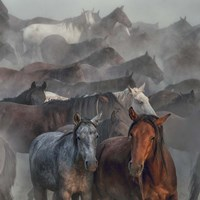 Two Horses Fine Art Print