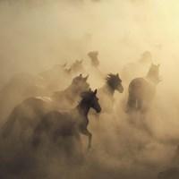 Migration Of Horses Fine Art Print