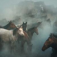 Lost Horses Fine Art Print
