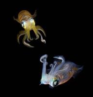 Sea Jewels Fine Art Print