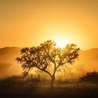 Golden Sunrise Fine Art Print