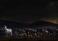 An Evening In Kenya Fine Art Print