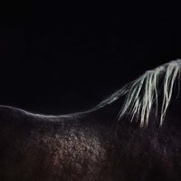 The Naked Horse Fine Art Print