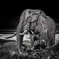 Sunset At The Waterhole Fine Art Print