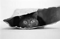 Cat In A Bag Fine Art Print