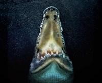 Jaws Fine Art Print
