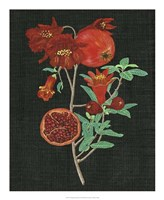 Pomegranate Study I Fine Art Print