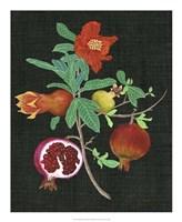Pomegranate Study II Fine Art Print