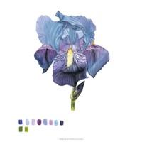 Brighton Blooms IV Fine Art Print