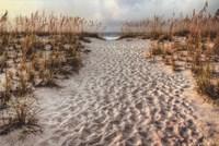 Path To The Beach Fine Art Print