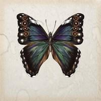 Butterfly Study III Fine Art Print