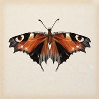 Butterfly Study V Fine Art Print
