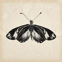 Butterfly Study VI Fine Art Print