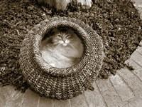 Cat in a Basket Fine Art Print
