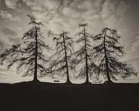 Park Trees Fine Art Print