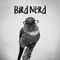 Bird Nerd - Hummingbird Fine Art Print
