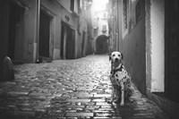 The Lost Dog Fine Art Print