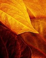 Leaves Fine Art Print
