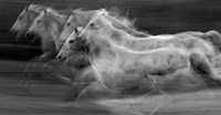 Gallop In The Repetition Fine Art Print
