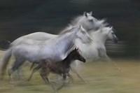 In Gallop Fine Art Print