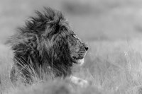 The King Is Alone Fine Art Print