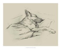 Dog Days IV Framed Print