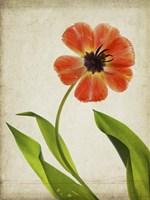 Parchment Flowers V Fine Art Print
