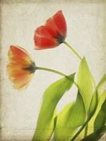 Parchment Flowers VI Fine Art Print