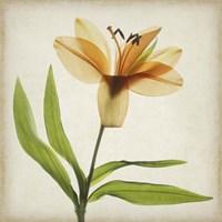 Parchment Flowers XI Fine Art Print