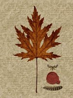 Autumn Leaf I Framed Print