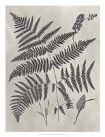 Vintage Fern Study IV Fine Art Print