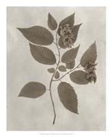Arbor Specimen II Framed Print