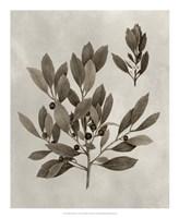 Arbor Specimen IV Framed Print