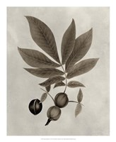 Arbor Specimen VI Framed Print