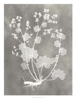 Herbarium Study I Framed Print