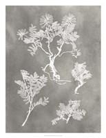Herbarium Study II Framed Print