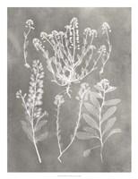 Herbarium Study III Framed Print