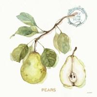 My Greenhouse Fruit I Fine Art Print