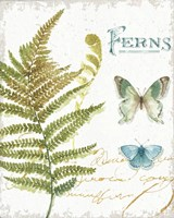 My Greenhouse Botanical III Fine Art Print